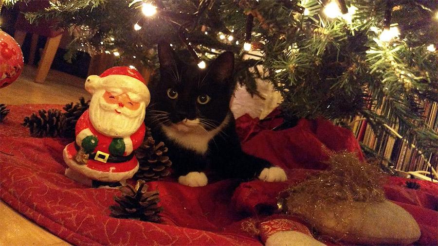 Tommie-kerstboom